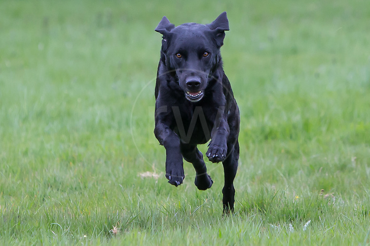 Portrait Shoot  - Gun Dogs  20th April 2017  Raw