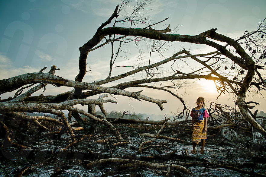February 24, 2011 - Mondulkiri (Cambodia). A young Pnong child poses in front of burned trees in Pou Pring village. Indigenous people who live in this part of the country are among the most affected by logging, and the consequent loss of natural resources of which they are dependant upon. © Thomas Cristofoletti / Ruom
