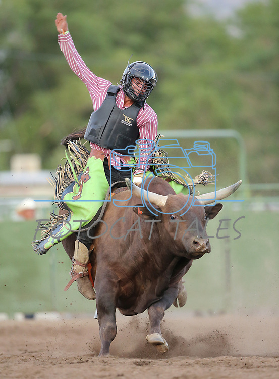 Images from the 5th Annual Carson City Bulls, Broncs & Barrels event at Fuji Park, in Carson City, Nev., on Saturday, July 29, 2017. <br /> Photo by Cathleen Allison/Nevada Photo Source