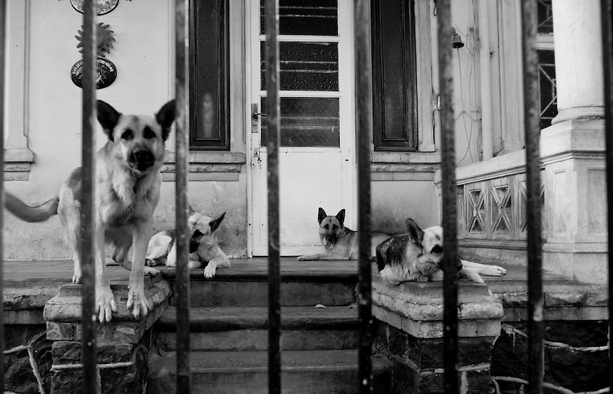German Shepards outside of a house in the Colonia Roma, Mexico DF