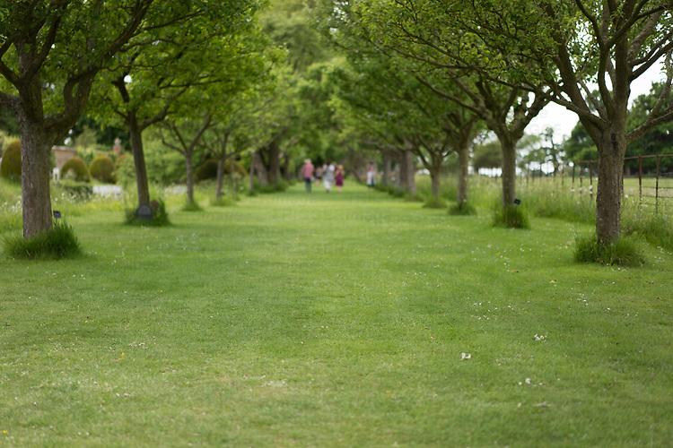 Helmingham Hall gardens in Suffolk England. Apple Walk