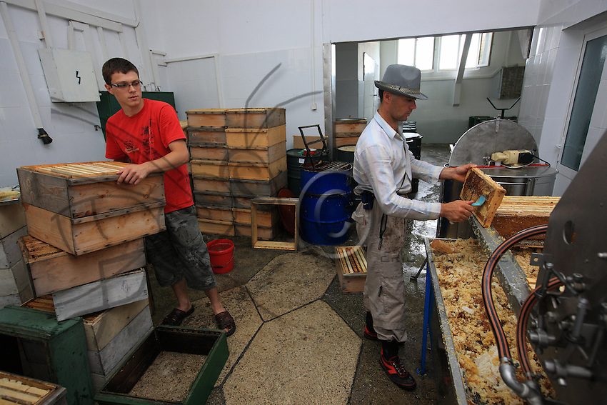 In Ciucurova, at the company Fileomera SRL, which buys a lot of the linden honey from the migratory beekeepers by paying cash, the extraction of honey takes place in a space that meets European standards. After the fall of Ceausescu and the end of communism, the honey cooperatives quickly closed leaving the industry in total disarray.