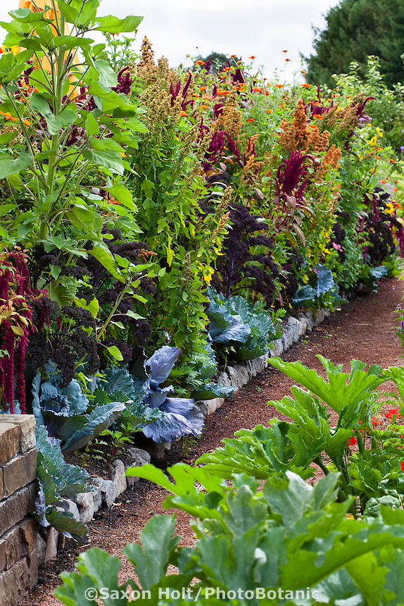 Intensive organic mixed vegetable garden interplanted with cabbage,  kale, quinoa, amaranth