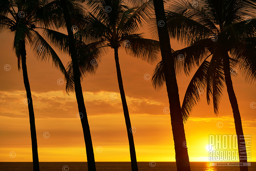 A line of silhouetted palm trees in front of a bright golden sunset, seen from a beach in Kailua-Kona, Hawai'i Island.