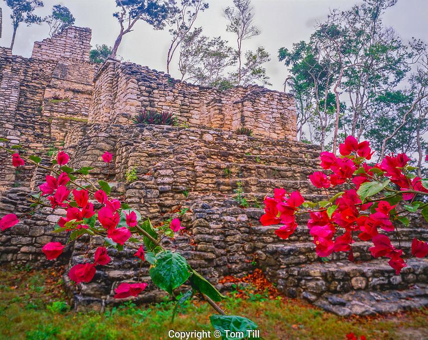 Bougainvillea at Temple of the Sun, Konichna Mayan Ruin, Quintana Roo State, Yucatan, Mexico