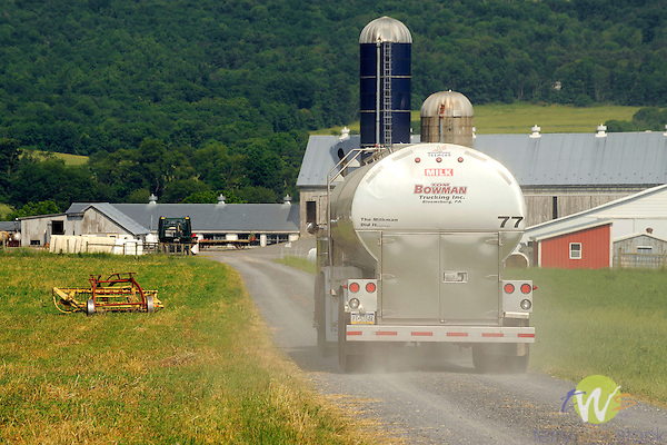Stoltzfus Farm, Nippenose Valley, PA. Milk truck for pick-up.