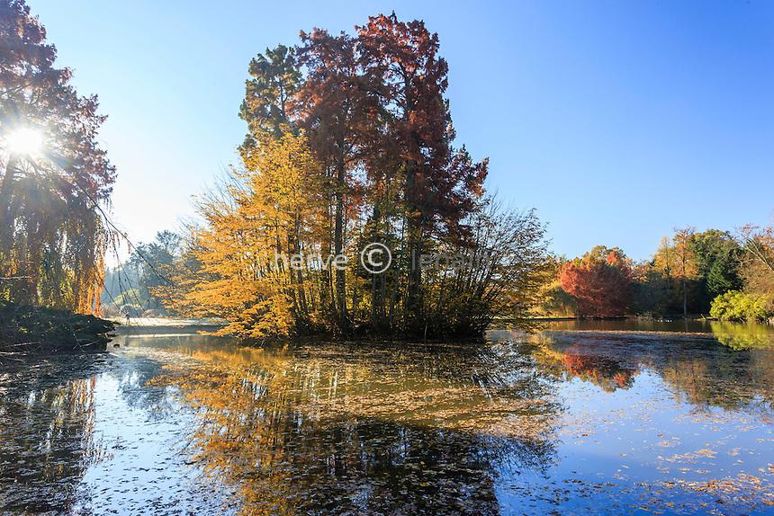 France, Allier (03), Villeneuve-sur-Allier, Arboretum de Balaine en automne, île sur l'étang plantée de cyprès chauve, Taxodium distichum
