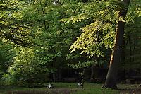 Zijpendaal Park in Netherlands