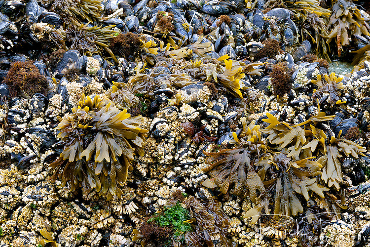 Marine life exposed during low tide at Whaleshead Beach in Southern Oregon.