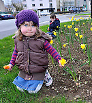 What a difference a year makes... January 8th last year the temperature in Killarney was -6 degrees with ice and snow everywhere and yesterday it was a 'sweltering' +10degrees with daffodils abundant in bloom, the earliest ever seen according to some locals. Our picture shows Ciara O'Sullivan (3) and her brother Shane from Killarney at a daffodil bed at the entrance to Killarney town on Sunday..Picture by Don MacMonagle