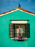 Aqua wall and window, pigeon. The colorful village of Burano, Italy.