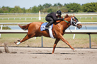 #70Fasig-Tipton Florida Sale,Under Tack Show. Palm Meadows Florida 03-23-2012 Arron Haggart/Eclipse Sportswire.