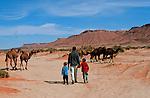 Randonnée chamelière dans les dunes de l'erg Chebbi au sud de Rissani. Jean Lou et Félix en selle,  Grand sud marocain. Maroc