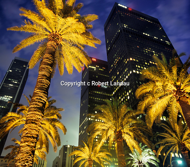 Downtown Los Angeles with Palm Trees at Night