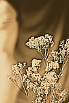 Sepia coloured flowers