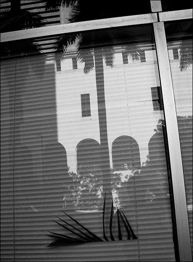 Office plant<br /> From &quot;Office space&quot; series. Downtown Miami, FL