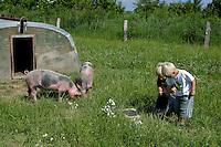 Kinder füttern Schweine, Hausschwein, Haus-Schwein, Schwein, Artgerechte Tierhaltung auf Bio-Bauernhof, Bauernhof, Glückliche Schweine, hog, pig, pigs, swine