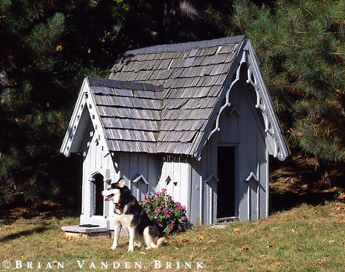 Gothic Dog House.circa 1880's.Bangor, Maine.