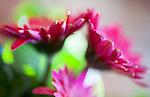 Daisy Floral Art