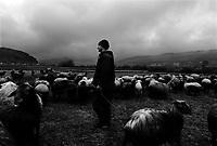 Shirgah, Iran, March 28, 2007.A flock of 300 sheeps, sheperd in cold and rainy weather by Nasser, 24.