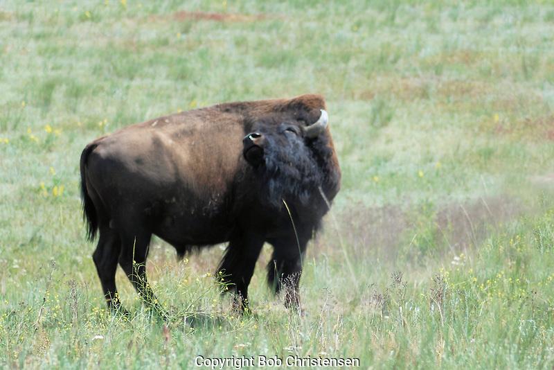 Montana and Wyoming photos