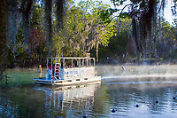 Tour boat operators make an early morning excursion towards the warm waters of the Three Sisters Sanctuary to see manatees in their natural environment. Crystal River,Florida.