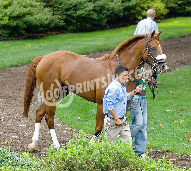 Dancing to Town before The Forever Together Stakes at Delaware Park on 9/1/12