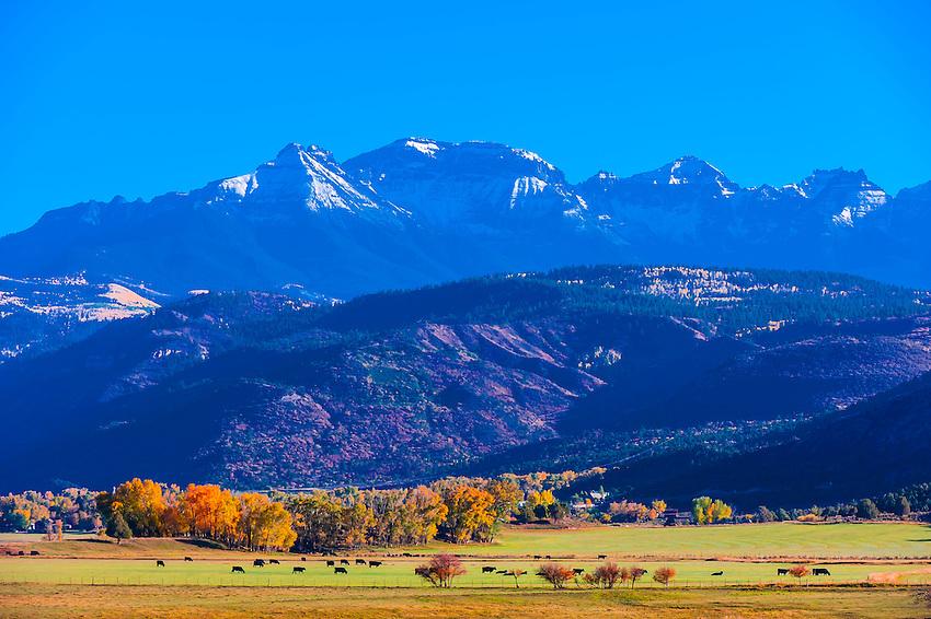 Fall color, Ridgway, Colorado USA.