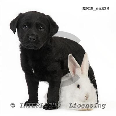 Xavier, ANIMALS, fondless, photos, SPCHWS314,#A#