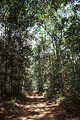 Trombetas River, Para State, Brazil. Dirt road through the Amazon forest with sunlight filtering through the canopy.