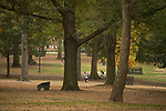 Fall in the grove. Photo by Kevin Bain/University Communications Photography