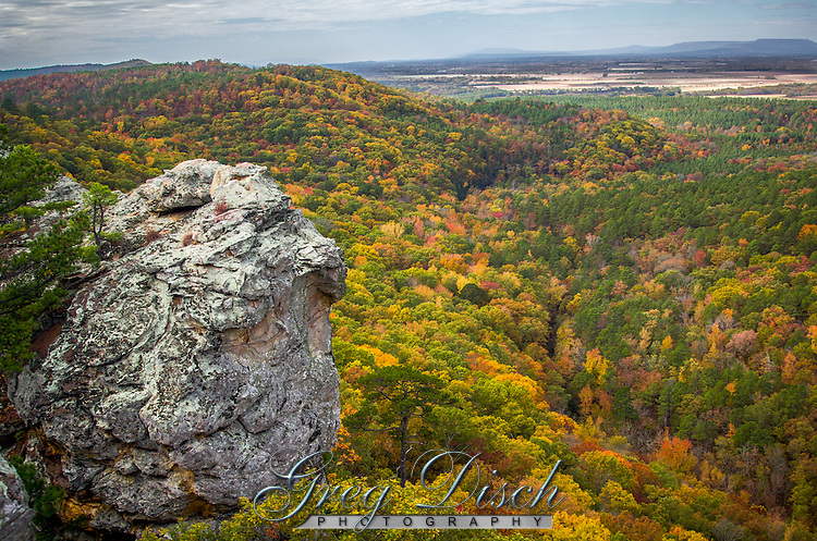 A fantastic display of fall color viewed from the Palisades Overlook at Petit Jean State Park in Arkansas.