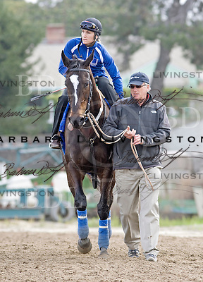 Zenyatta at Hollywood Park