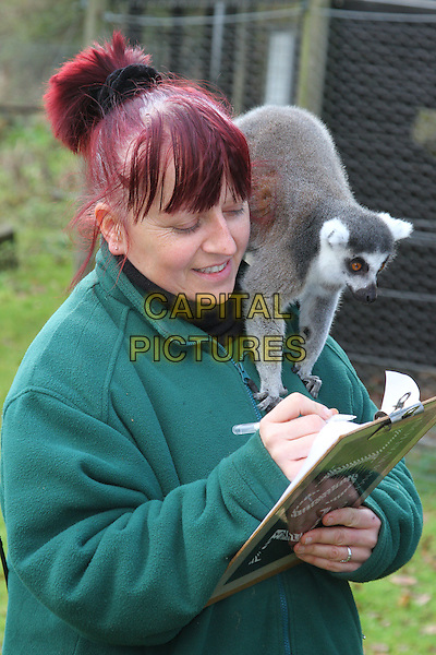Keeper Kathy with Ring Tailed Lemur.Annual Stocktake of all species at the UK's biggest Zoo, ZSL Whipsnade Zoo, Dunstable, Bedfordshire, England..January 10th 2012.animal animals half length green top on shoulder clipboard .CAP/JIL.©Jill Mayhew/Capital Pictures