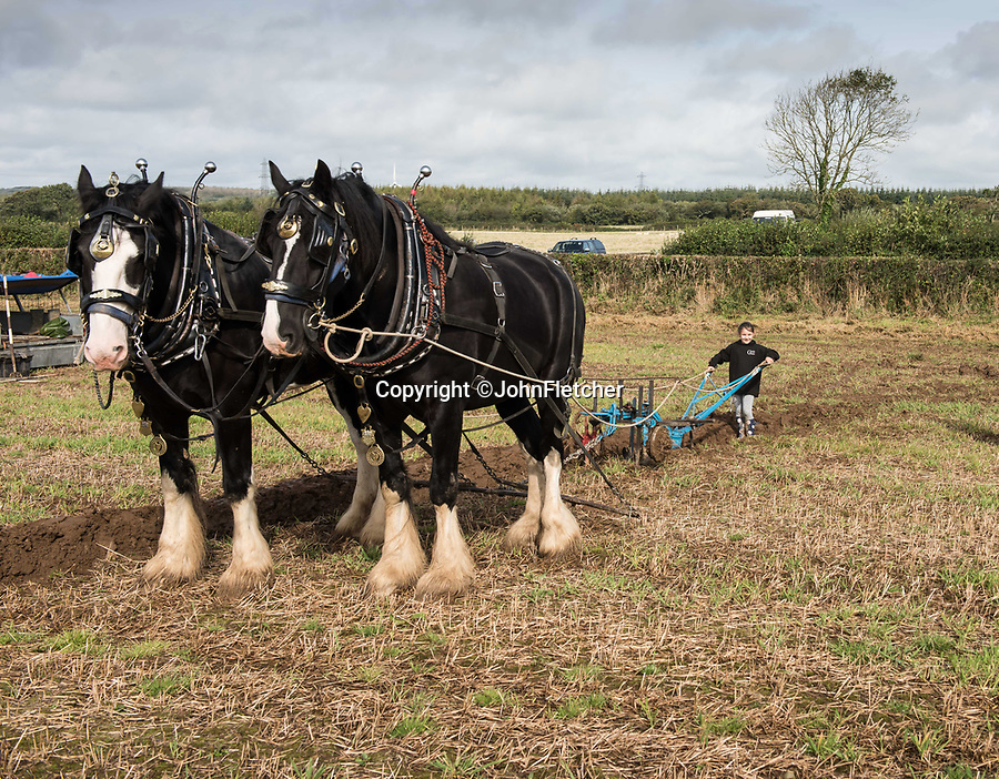 "BNPS.co.uk (01202 558833)<br /> Pic: JohnFletcher/BNPS<br /> <br /> Maia Fletcher(6) at a ploughing match in 2017.<br /> <br /> Little & large - While most children her age are glued to computer screens or playing on mobile phones, horse-mad Maia Fletcher prefers a more ancient form of entertainment.<br /> <br /> The eight-year-old spends any time she can after school and on weekends helping her grandfather John Fletcher with his five giant Shire horses.<br /> <br /> The pint-sized groomsman is not intimidated by the daunting size of the 18 hands high, one tonne beasts and first rode one when she just three years old.<br /> <br /> Despite having her own ""normal"" sized pony at home, Maia is far more interested in the mammoth Shires.<br /> <br /> The horse-loving youngster, who is just 4ft 6in tall, has been helping her grandfather out ever since - although she has to stand on a step-ladder to help wash and groom them and needs a leg up if she wants to go for a ride."