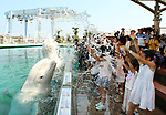August 3, 2019, Yokohama, Japan - Beluga whales spray water onto visitors to cool down at a summer attraction at the Hakkeijima Sea Paradise in Yokohama, suburban Tokyo on Saturday, August 3, 2019.   (Photo by Yoshio Tsunoda/AFLO)