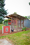 Chicken coop with chickens in an urban backyard