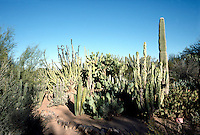 CACTUS VARIETIES<br /> Prickly Pear<br /> Botanical Garden