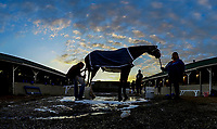 LOUISVILLE, KENTUCKY - MAY 03: (This image is a nine frame composite image created with in-camera software) A horse gets a bath at sunrise during Kentucky Derby and Oaks preparations at Churchill Downs on May 3, 2017 in Louisville, Kentucky. (Photo by Sydney Serio/Eclipse Sportswire/Getty Images)