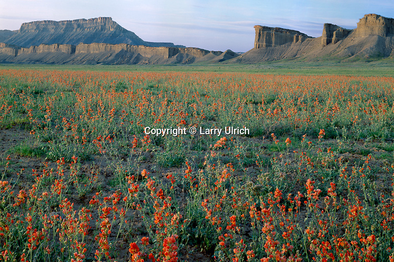 Nelson's globemallow and Swap Mesa<br />