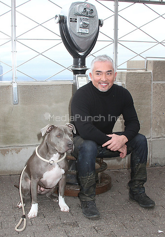 NEW YORK, NY - FEBRUARY 4: World-renown dog behaviorist and TV personality Cesar Millan and his dog Junior visit the Empire State Building to promote the new season of the TV series 'Cesar 911' on National Geographic WILD in New York, New York on February 4, 2016. Photo Credit: Rainmaker Photo/MediaPunch