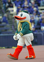 Oct 24, 2009:  The Oregon fighting duck mascot was on the sidelines entertaining Oregon Fans during the game against Washington. Oregon defeated Washington 43-19 at Husky Stadium in Seattle, Washington.