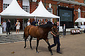 16/06/14 ***FREE PHOTO FOR EDITORIAL USE***<br /> <br /> The inaugural Goffs Summer Sale at Kensington Palace, London, saw the first ever sale of a Frankel foal that was sold to MV Magnier for &pound;1,150,000.<br /> <br /> <br /> <br /> <br /> All Rights Reserved: F Stop Press Ltd. +44(0)1335 300098   www.fstoppress.com.