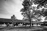 JUNE 06: Horses prepare to go to the track at Chad Brown's Barn at Belmont Park in Elmont, New York on June 06, 2019. Evers/Eclipse Sportswire/CSM