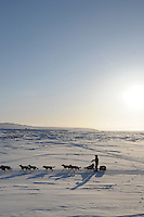 Iditarod musher Jeff King along Bering Sea, Alaska, minus 25 degrees