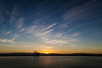 Gulls fly by as the sun slips behind the Santa Cruz Mountains across San Francisco Bay.