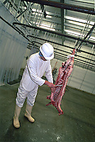 Government appointed meat hygiene service meat inspector at work in an abattoir checking to ensure that all of the spinal cord has been removed from the carcase. This image may only be used to portray the subject in a positive manner..©shoutpictures.com..john@shoutpictures.com
