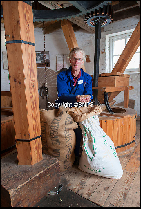 BNPS.co.uk (01202 558833)<br /> Pic: PhilYeomans/BNPS<br /> <br /> Flour power - Miller Jim Bailey<br /> <br /> Octo-mill turns again...'Ferrari of windmills' is restored.<br /> <br /> Britains only eight sailed windmill is working once again after a &pound;150,000 restoration to repair its unique sails.<br /> <br /> Heckington Mill has ground wheat to make flour since 1830 but it was closed down when two of its enormous wooden sails were found to have rotted. <br /> <br /> Four years and more than 100,000 pounds were spent crafting the one-tonne, 34ft sails from the trunks of Siberian larch trees so that the historic mill near Boston, Lincs, could continue to operate.<br /> <br /> And after a nail-biting operation to crane the old sails off and replace them with the new ones, the Grade I-listed building has been brought back to life.<br /> <br /> Eight-sailed mills were at the forefront of milling technology and experts have described Heckington Mill as &quot;the Ferrari of windmills&quot;.<br /> <br /> Miller Jim Bailey, 62, hopes that with the help of the mill's new sails he can increase output to five tonnes of flour a year within the next three years.