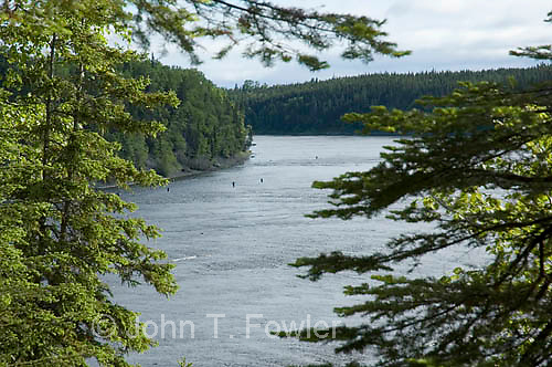 Fly fishing for Atlantic Salmon, Humber River, Newfoundland, Canada