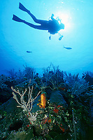 MARINE LIFE: BOAT, REEFS &amp; DIVERS<br /> Diver on reef<br /> Silhouetted underwater shot of diver with underwater photography equipment.